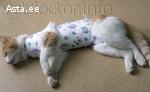 попона после стерелизации для кошки